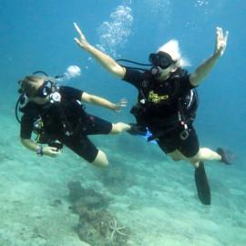 Referral Dives